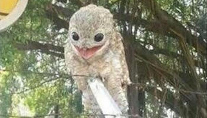 prehistoric-owl1